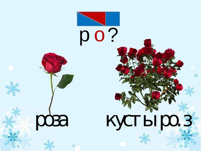 о р ? роза кусты ро. з