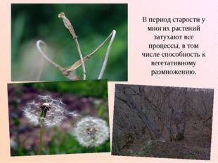 В период старости у многих растений затухают все процессы, в том числе способ