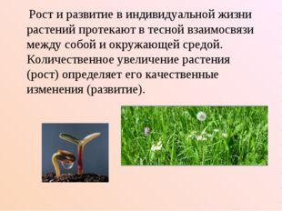 Рост и развитие в индивидуальной жизни растений протекают в тесной взаимосвя