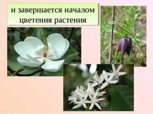 и завершается началом цветения растения