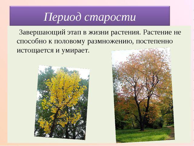Завершающий этап в жизни растения. Растение не способно к половому размножен...