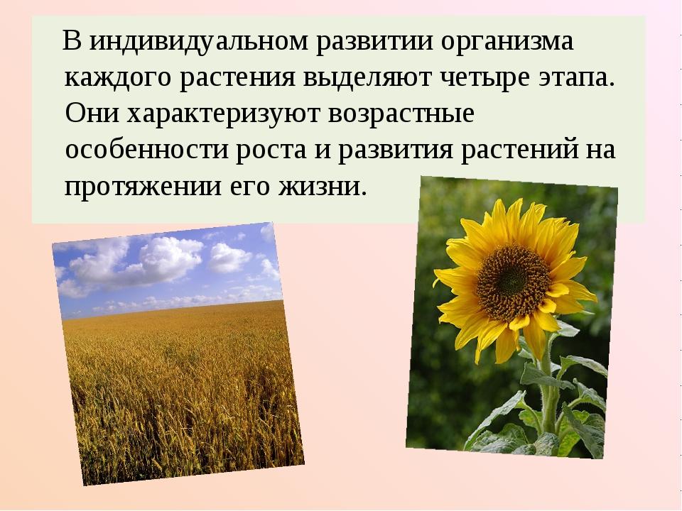 В индивидуальном развитии организма каждого растения выделяют четыре этапа....