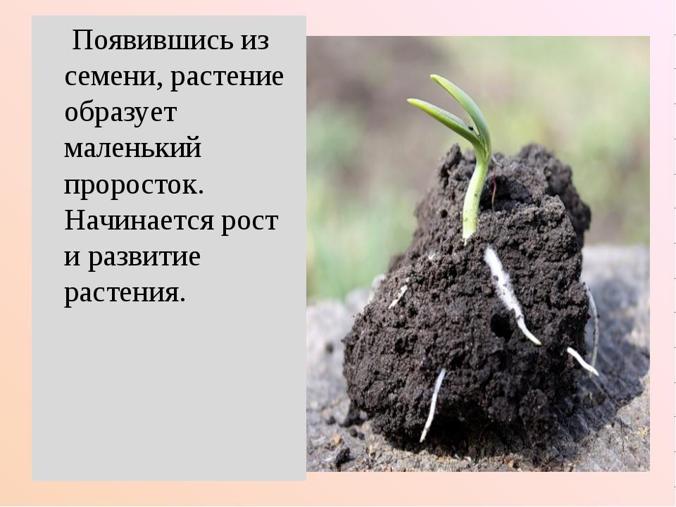 Появившись из семени, растение образует маленький проросток. Начинается рост...