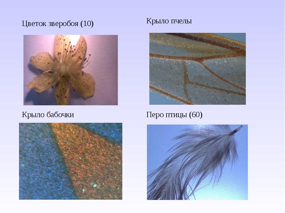Цветок зверобоя (10) Крыло пчелы Крыло бабочкиПеро птицы (60)
