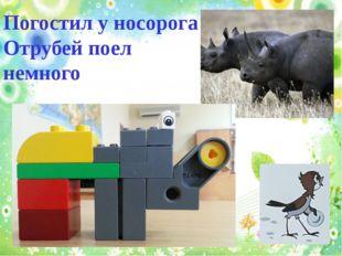 Погостил у носорога Отрубей поел немного