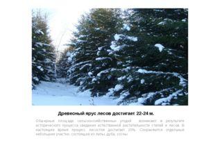 Древесный ярус лесов достигает 22-24 м. Обширные площади сельскохозяйственных
