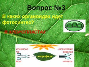 Вопрос №2 Наука, изучающая растения? БОТАНИКА