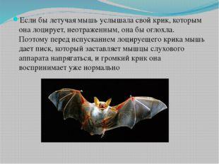 Если бы летучая мышь услышала свой крик, которым она лоцирует, неотраженным,