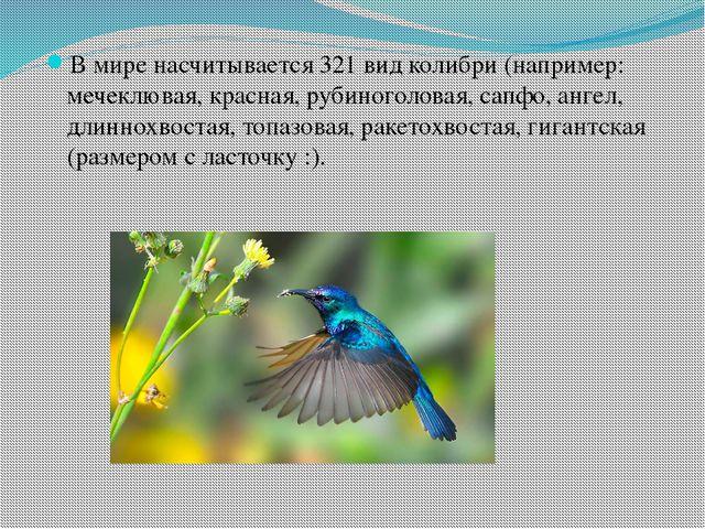 В мире насчитывается 321 вид колибри (например: мечеклювая, красная, рубиног...