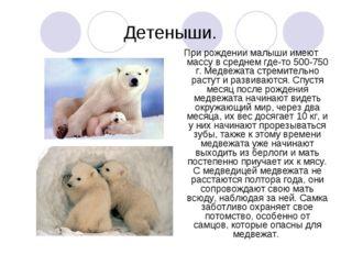 Детеныши. При рождении малыши имеют массу в среднем где-то 500-750 г. Медвежа