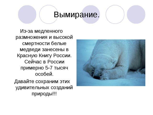 Вымирание. Из-за медленного размножения и высокой смертности белые медведи за...