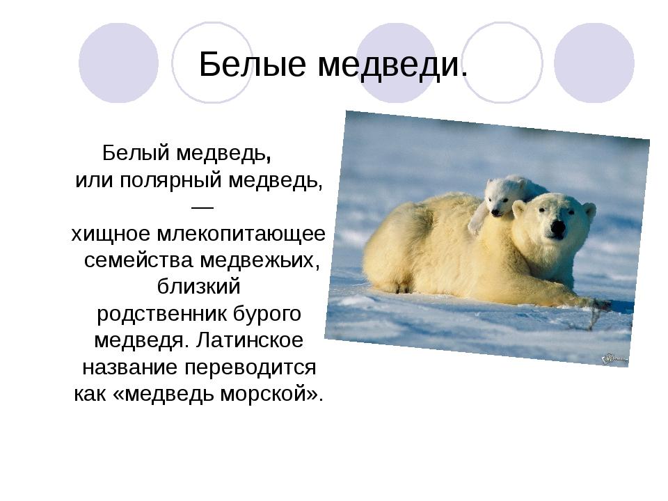 Белые медведи. Белый медведь, илиполярный медведь, — хищноемлекопитающеес...