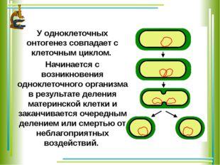 У одноклеточных онтогенез совпадает с клеточным циклом. Начинается с возникно