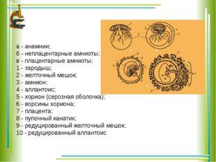 а - анамнии; б - неплацентарные амниоты; в - плацентарные амниоты; 1 - зароды