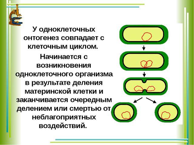 У одноклеточных онтогенез совпадает с клеточным циклом. Начинается с возникно...