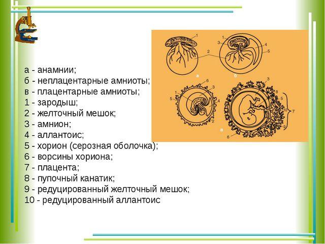 а - анамнии; б - неплацентарные амниоты; в - плацентарные амниоты; 1 - зароды...