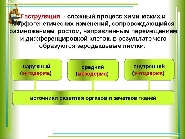 Гаструляция - сложный процесс химических и морфогенетических изменений, соп...