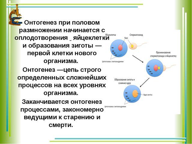 Онтогенез при половом размножении начинается с оплодотворения яйцеклетки и об...