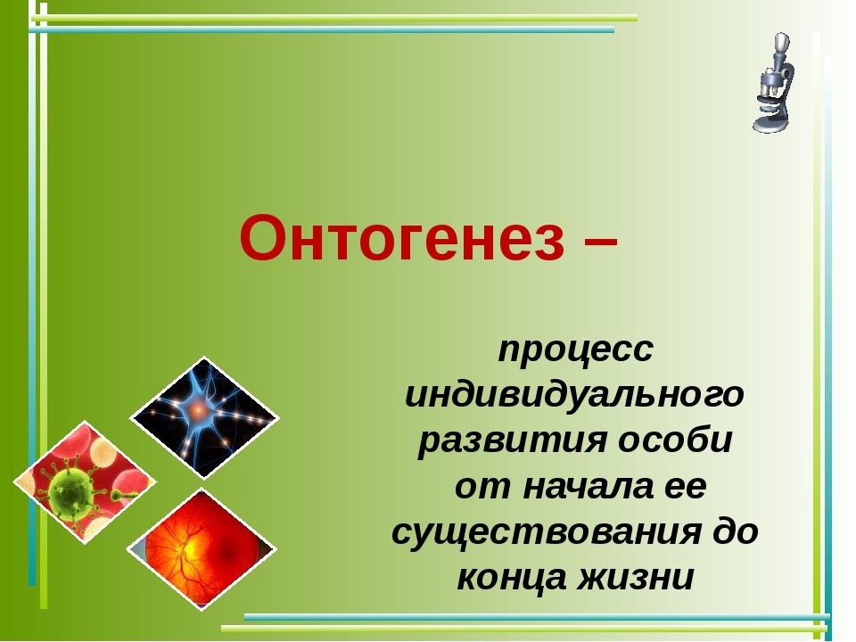 Онтогенез – процесс индивидуального развития особи от начала ее существования...