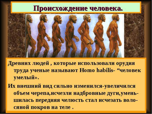 Австалопитеки были маленького роста, их тело было покрыто шерстью,но они уже...