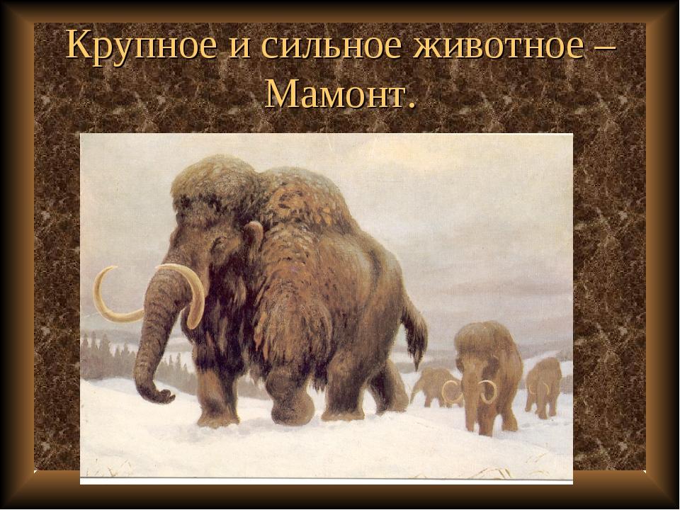 Крупное и сильное животное – Мамонт.