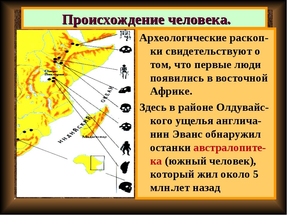 Происхождение человека. Археологические раскоп-ки свидетельствуют о том, что...