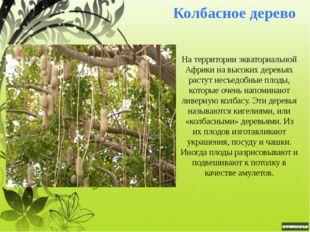Конфетное дерево Конфетное дерево Говения сладкая растет в лесах тропической