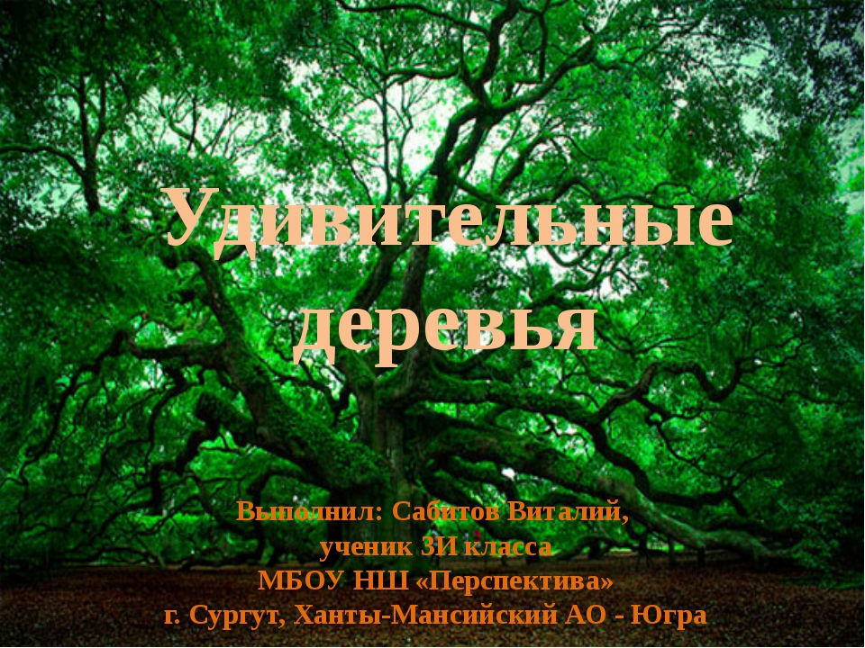 Удивительные деревья Выполнил: Сабитов Виталий, ученик 3И класса МБОУ НШ «Пер...