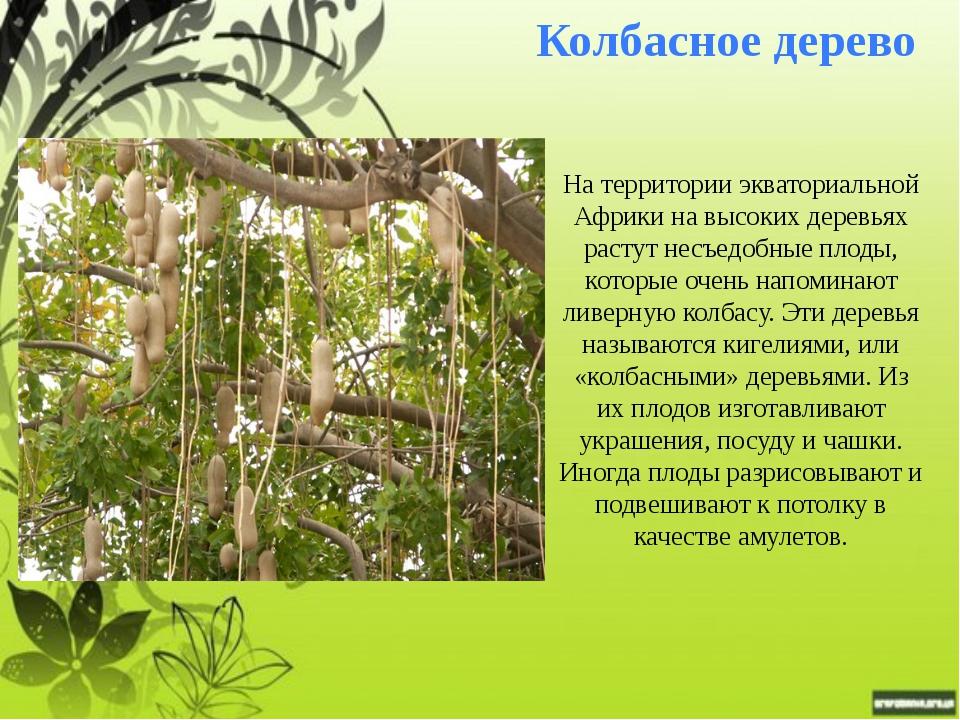 Конфетное дерево Конфетное дерево Говения сладкая растет в лесах тропической...