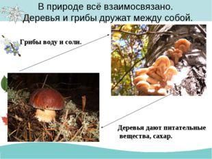 В природе всё взаимосвязано. Деревья и грибы дружат между собой. Деревья даю