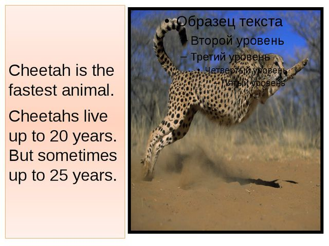 Cheetah is the fastest animal. Cheetahs live up to 20 years. But sometimes up...