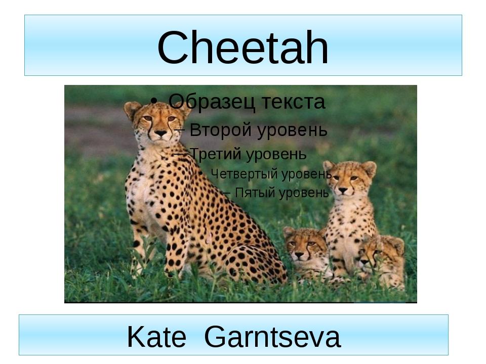 Cheetah Kate Garntseva