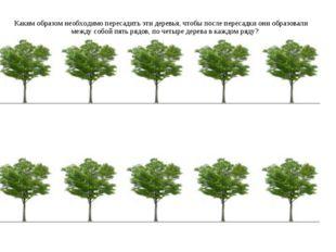 Каким образом необходимо пересадить эти деревья, чтобы после пересадки они об