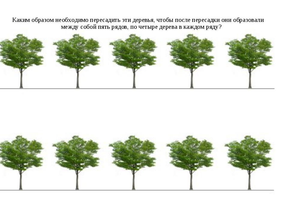 Каким образом необходимо пересадить эти деревья, чтобы после пересадки они об...