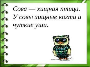 Сова — хищная птица. У совы хищные когти и чуткие уши.