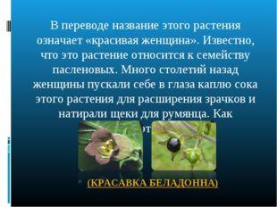 В переводе название этого растения означает «красивая женщина». Известно, что