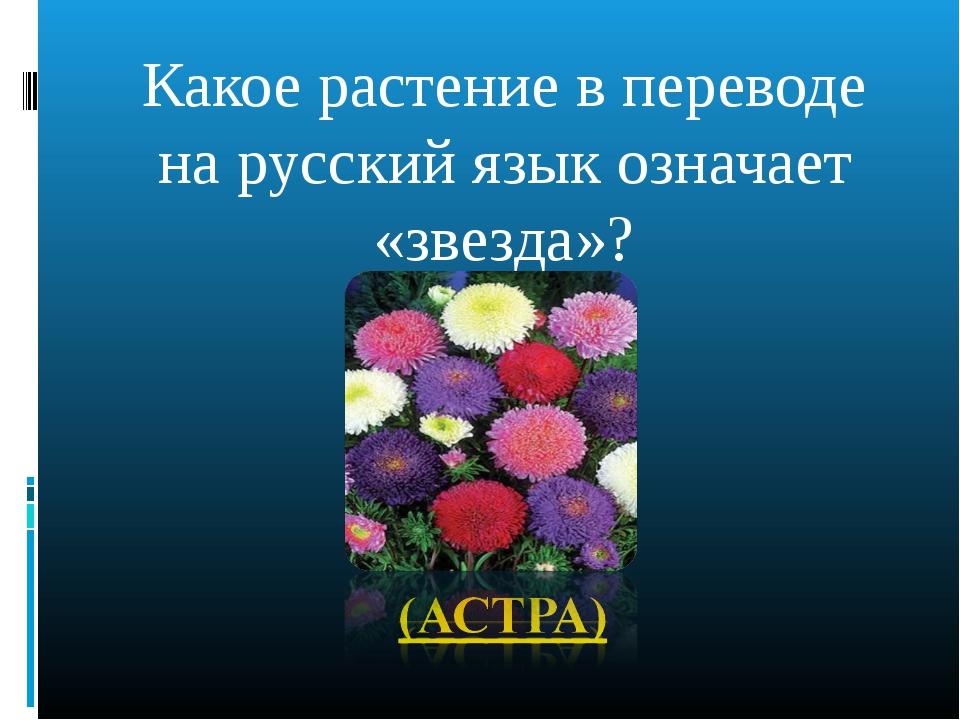Какое растение в переводе на русский язык означает «звезда»?