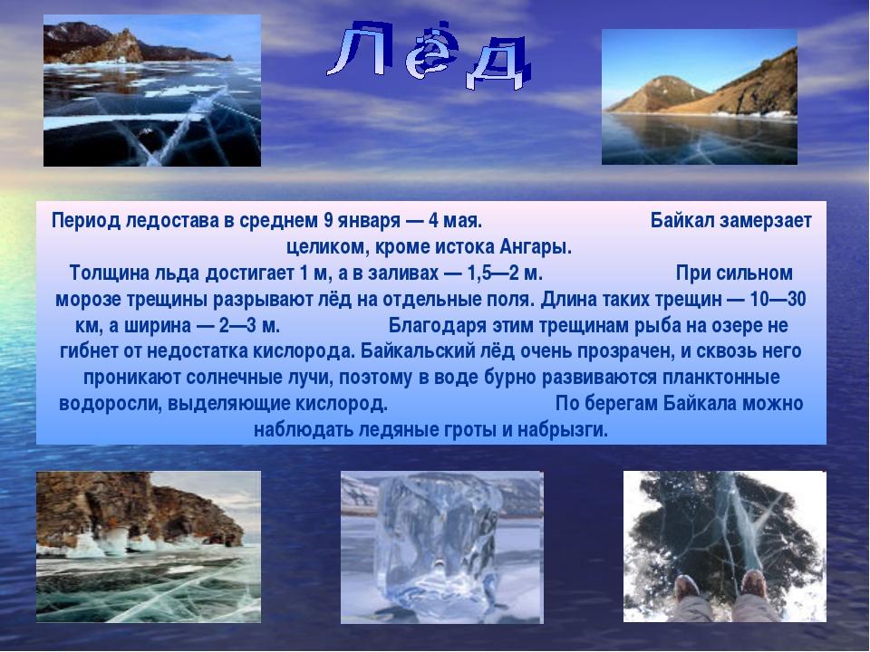 Период ледостава в среднем 9 января — 4 мая. Байкал замерзает целиком, кроме...