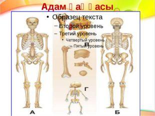 Адам қаңқасы