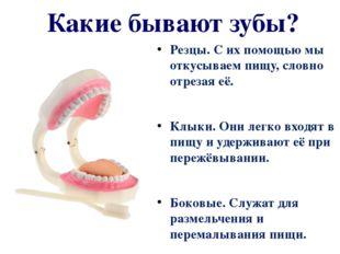 Какие бывают зубы? Резцы. С их помощью мы откусываем пищу, словно отрезая её.