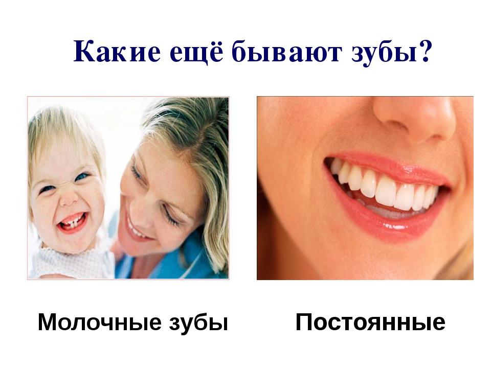 Какие ещё бывают зубы? Постоянные Молочные зубы