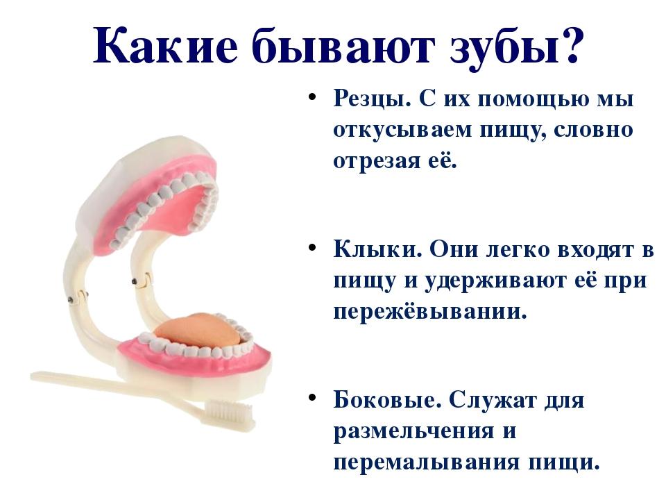 Какие бывают зубы? Резцы. С их помощью мы откусываем пищу, словно отрезая её....