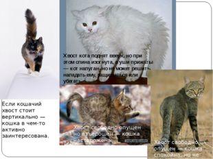 Если кошачий хвост стоит вертикально — кошка в чем-то активно заинтересована