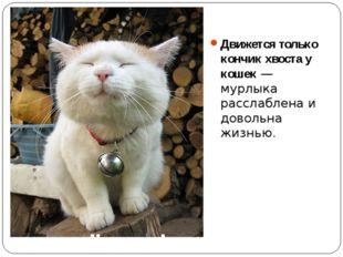 Движется только кончик хвоста у кошек — мурлыка расслаблена и довольна жизнью.