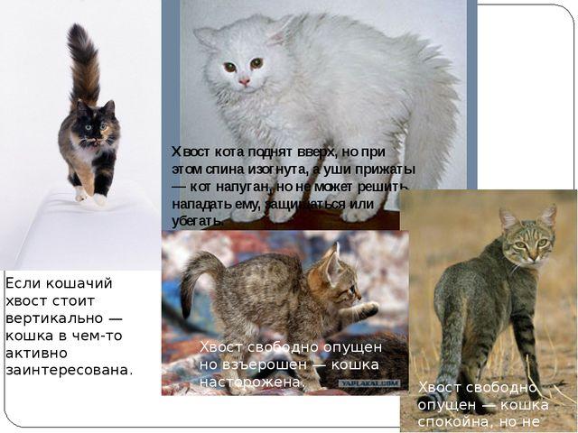 Если кошачий хвост стоит вертикально — кошка в чем-то активно заинтересована...