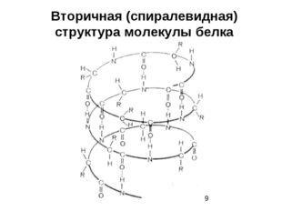 Вторичная (спиралевидная) структура молекулы белка