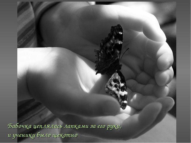 Бабочка цеплялась лапками за его руки, и ученику было щекотно