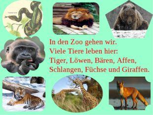 In den Zoo gehen wir. Viele Tiere leben hier: Tiger, Löwen, Bären, Affen, Sc