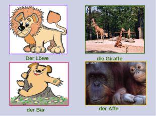 Der Löwe die Giraffe der Bär der Affe