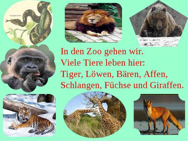 In den Zoo gehen wir. Viele Tiere leben hier: Tiger, Löwen, Bären, Affen, Sc...